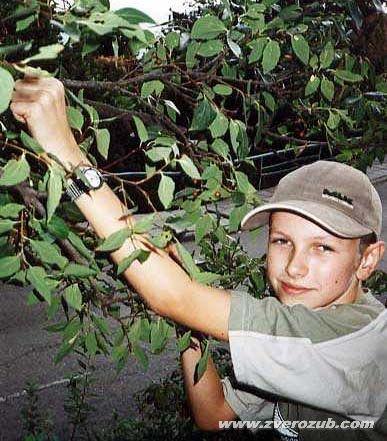 Ягоды кукули (конопляное дерево, каркас) в Мисхоре и местный мальчишка