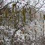 цветущий фундук, Алимова балка, Качинская долина, Крым