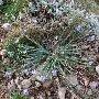 фото: Флора и растительность Крыма